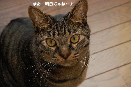 20090409kotetsu.jpg