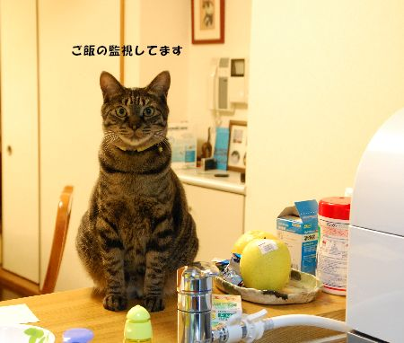 20090410kotetsu2.jpg