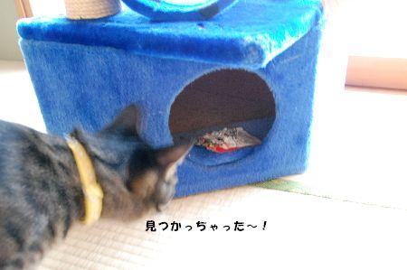 20090413kotetsu4.jpg