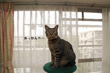 20090417kotetsu4.jpg