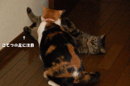 20090418mikankotetsu2.jpg