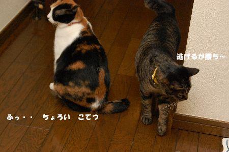 20090418mikankotetsu5.jpg