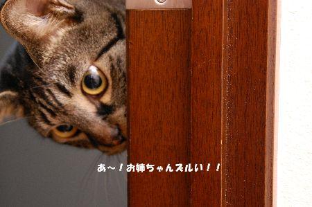 20090424kotetsu5.jpg