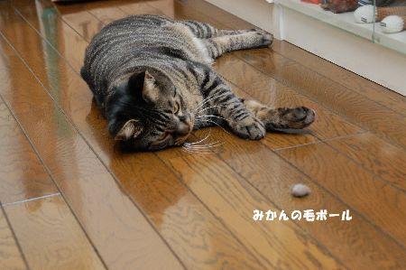 20090426kotetsu5.jpg