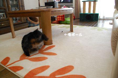 20090430kotetsu.jpg
