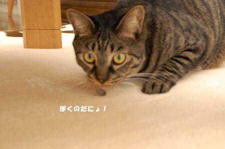 20090508kotetsu3.jpg