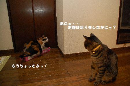 20090516mikankotetsu4.jpg