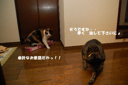 20090516mikankotetsu5.jpg