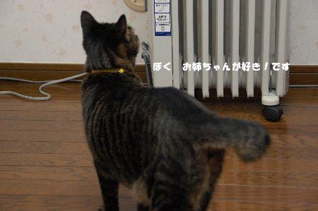 20090518kotetsu4.jpg
