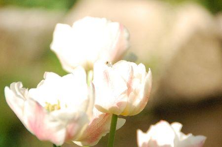 20090530hurano11.jpg