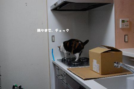 20090603mikan3.jpg