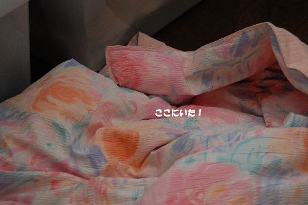 20090605kotetsu2.jpg