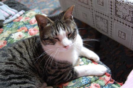 20090607daisuke.jpg