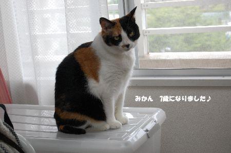 20090608mikan.jpg