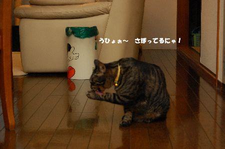 20090614kotetsu.jpg