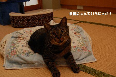20090621kotetsu2.jpg