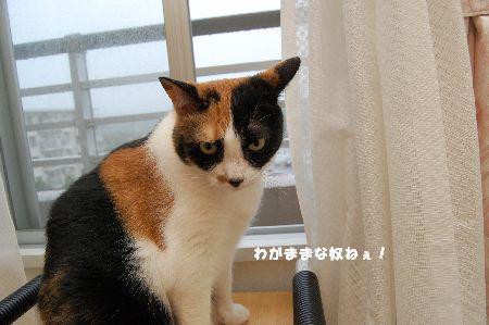 20090621mikan.jpg