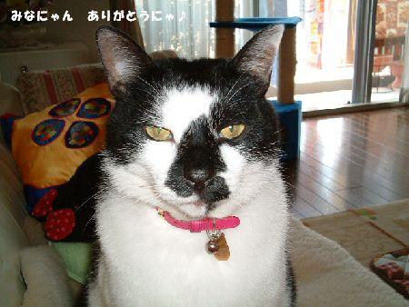 20090621sasuke2.jpg
