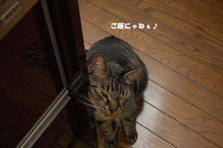20090623kotetsu2.jpg