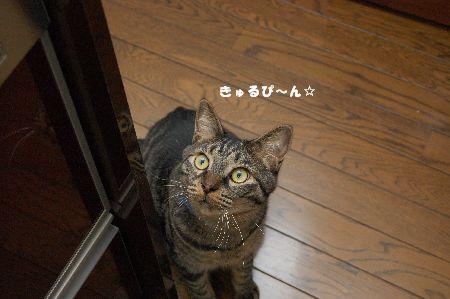 20090623kotetsu3.jpg