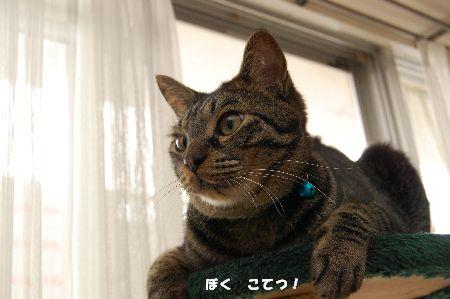 20090625kotetsu5.jpg