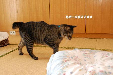 20090626kotetsu4.jpg