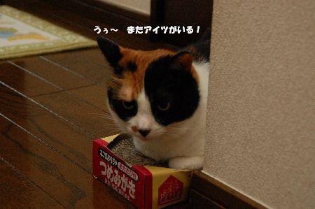 20090630mikan.jpg