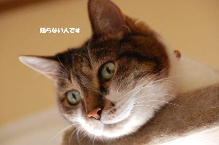 20090708chibi.jpg