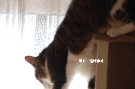 20090708chibi2.jpg