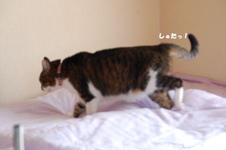 20090708chibi3.jpg