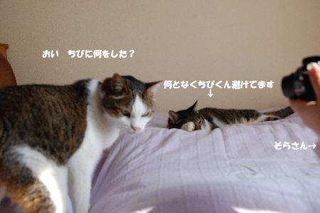 20090708myaachibi.jpg
