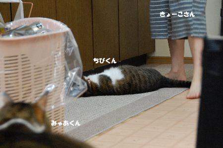 20090709myaachibi.jpg