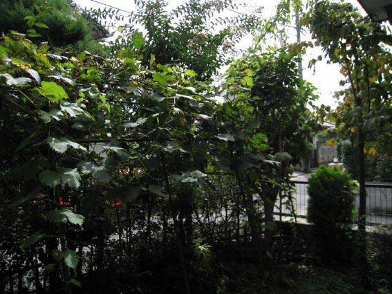200808_0581-1.jpg