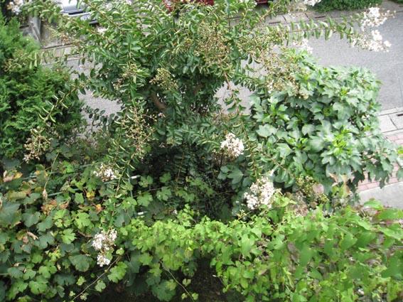 200808_0589-1.jpg