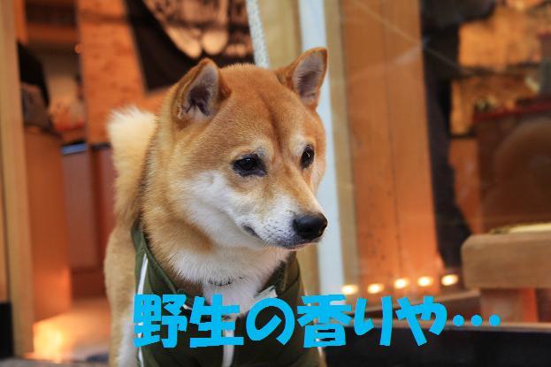 石川県 元太 087