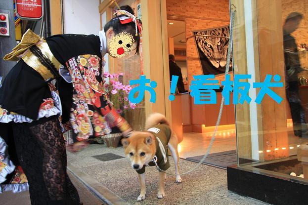 石川県 元太 090