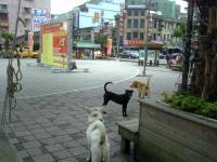 瑞芳駅前の野良犬
