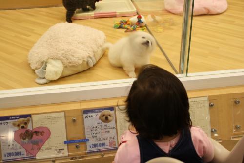 犬の赤ちゃんに見入る 人間の赤ちゃん