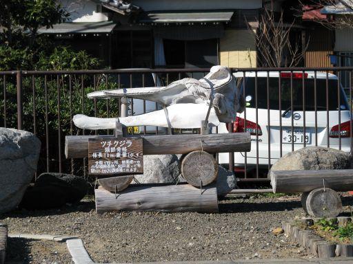JR内房線 和田浦駅 ツチクジラ頭部骨格