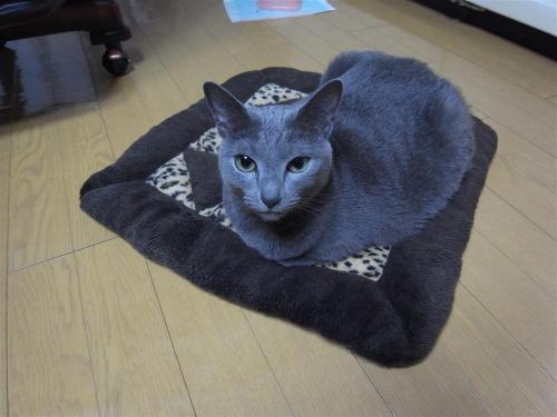 我が家のネコ090323