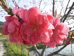 2011_05_inaji1