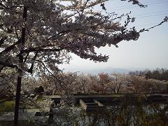 2011_05_inaji3