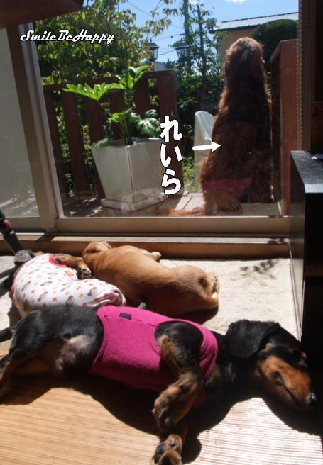 dogs_20100925191155.jpg
