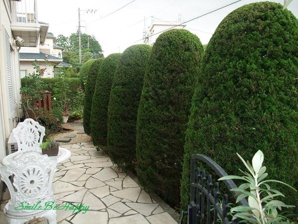 gardenaug1.jpg