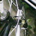 草のつるが絡まったバイク