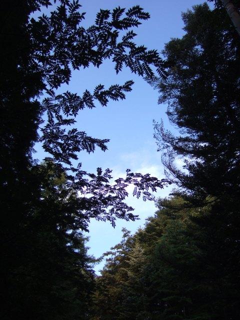 kimotiii
