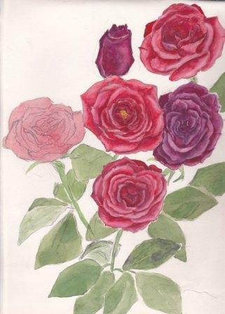 rozehaha