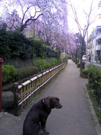 yousuiro1