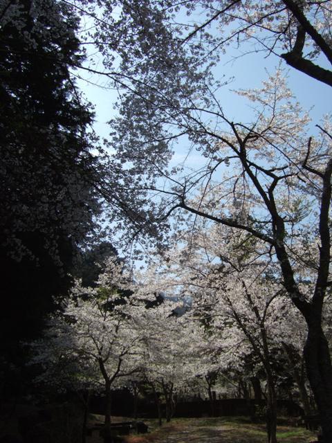 yamanokami4