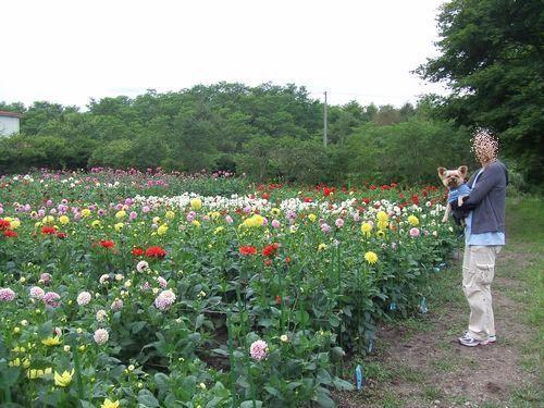 090830-yamaki-farm2.jpg